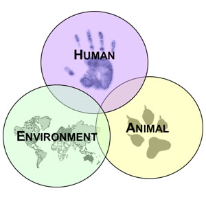 One Health Triad: Human; Animal; Environment