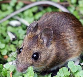 Mouseinfield-2-blogsize