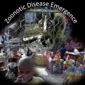 ZoototicDiseaseCivetChildChickensblogsize