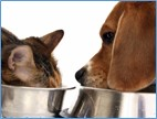 Cat and dog eating out of bowls