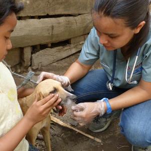 Vet student examining dog in Nicaragua