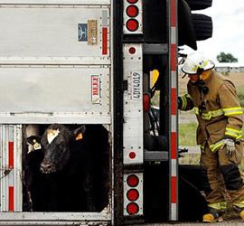 cowtrailer-firefighter-blogsize