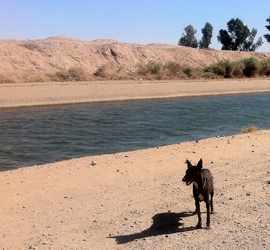 A stray dog traveling next to an irrigation canal in northern Mexico