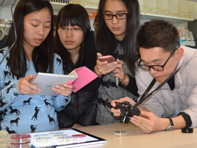 Nanjing Agricultural University students looking at samples in lab