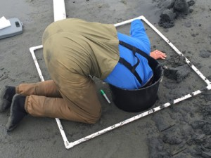 Before any digging takes place, Melissa and Ronny determine the density of clams in a 1m-square area using a quadrant.
