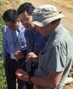 Tony Turkovich explains tomato production to Chancellor Wei Zuo and Yingjun Liu
